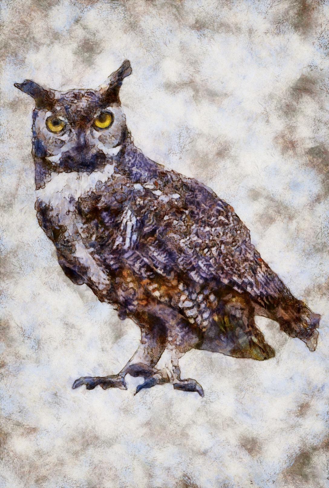 OWL_DAP_Benson_in_Distress