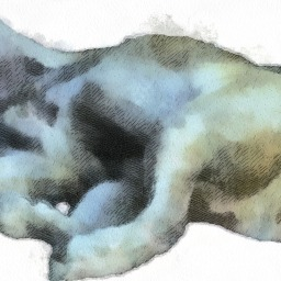 Moby's Enjoying Longer Days…by Sleeping