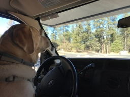 Moby's Excellent RV Camping Adventure (Roadtrip to Prescott, Arizona)