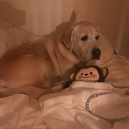 Moby Cuddling with His Monkey